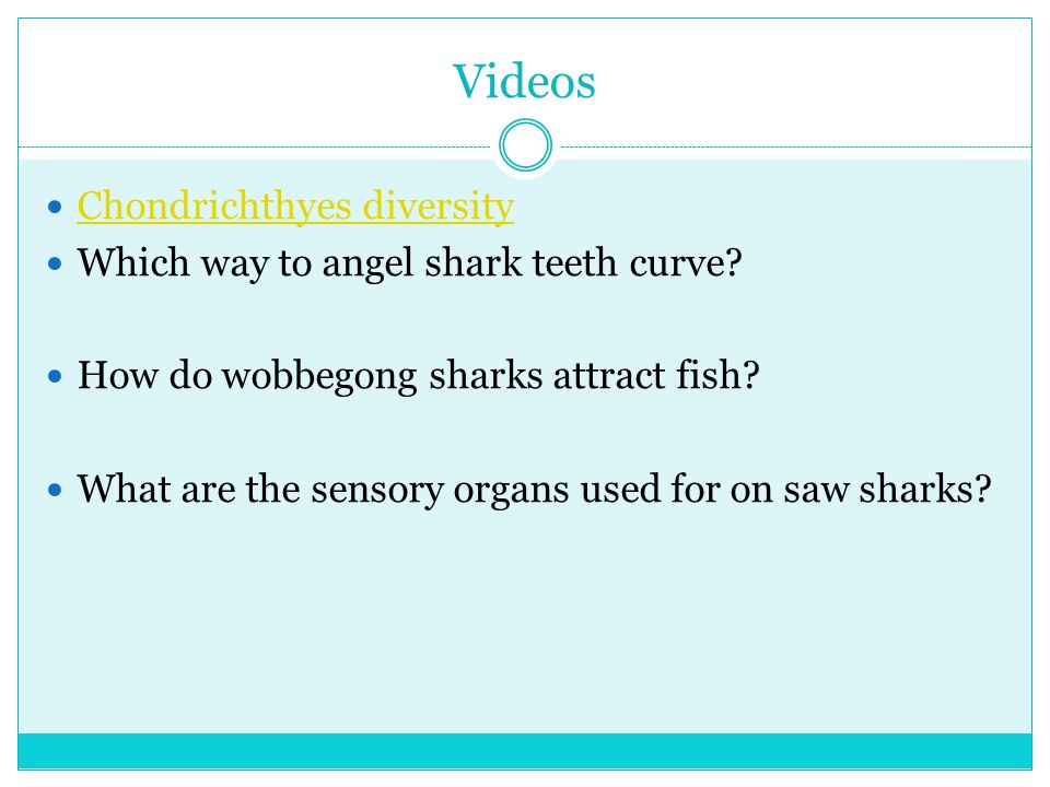 Videos Chondrichthyes diversity Which way to angel shark teeth curve