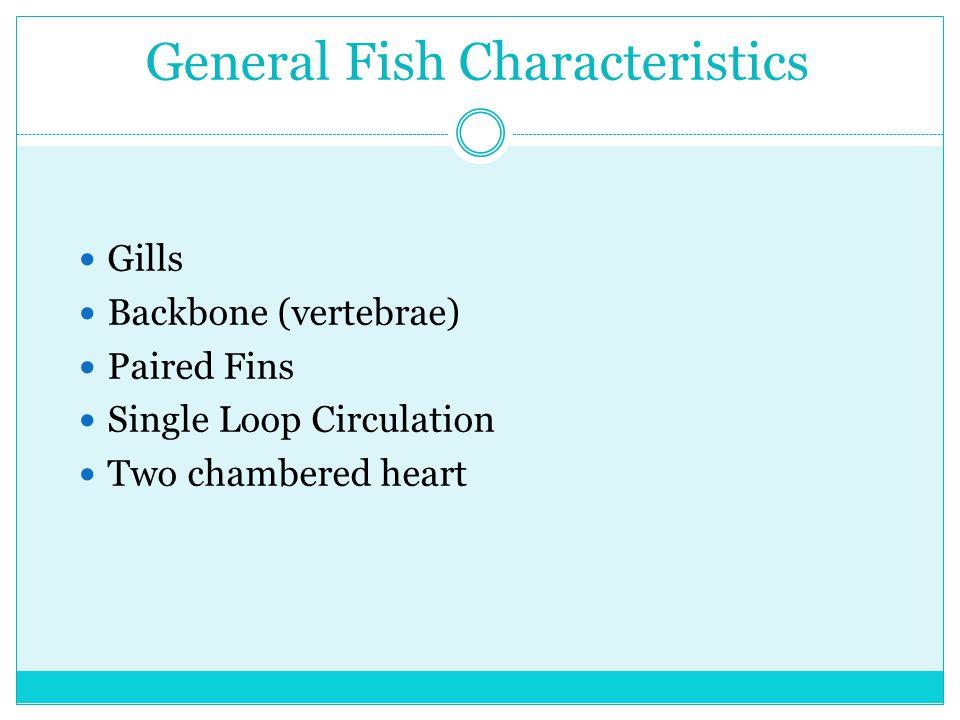 General Fish Characteristics