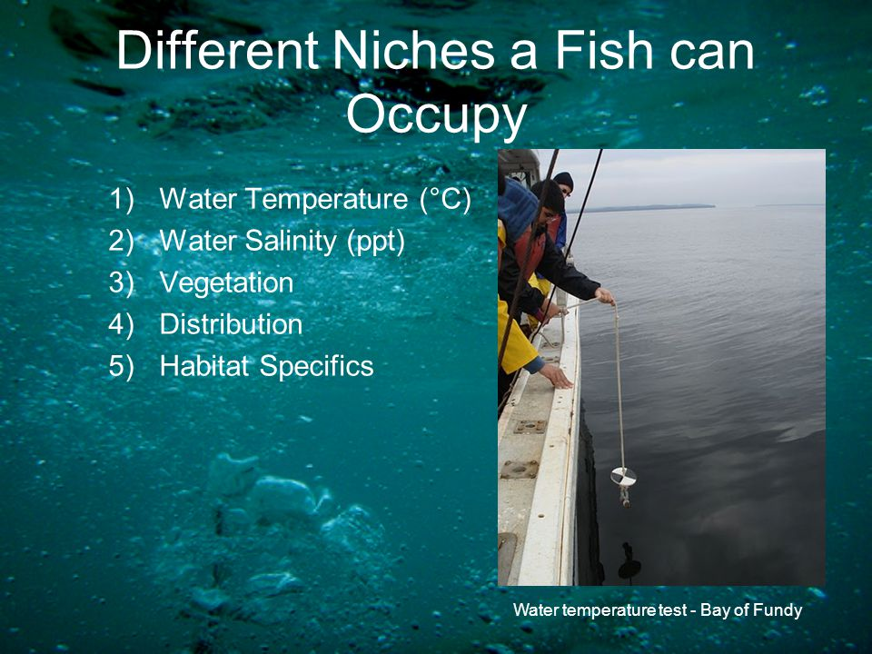 Different Niches a Fish can Occupy