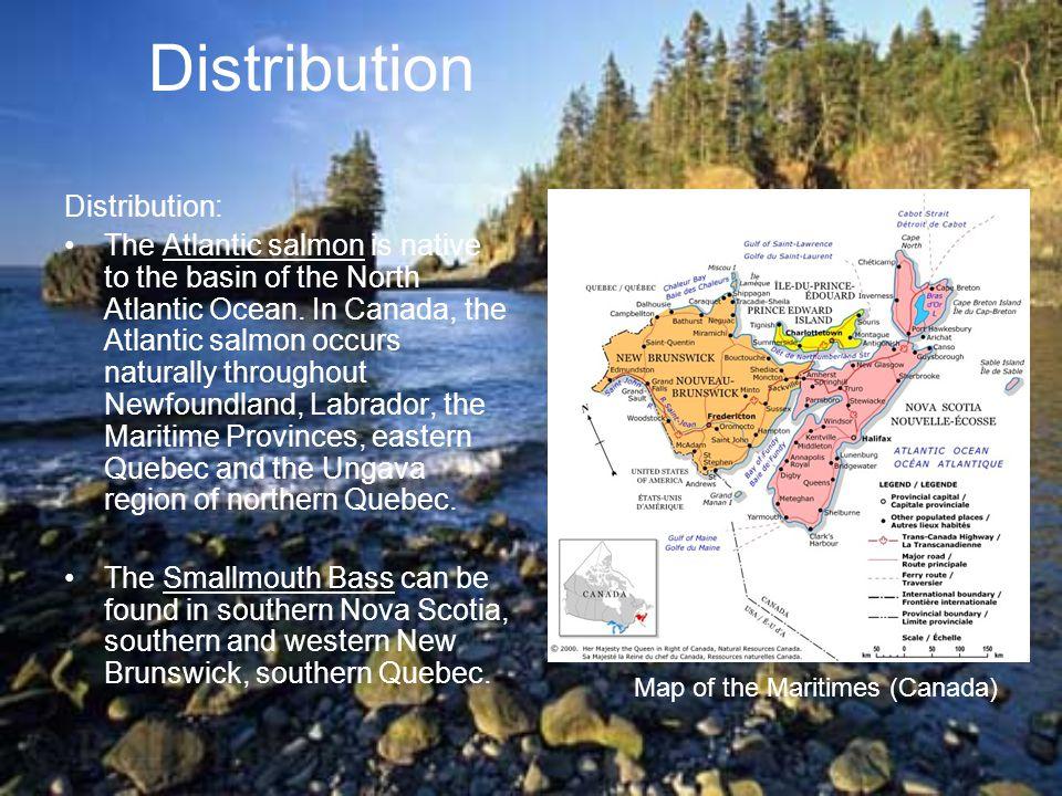 Distribution Distribution:
