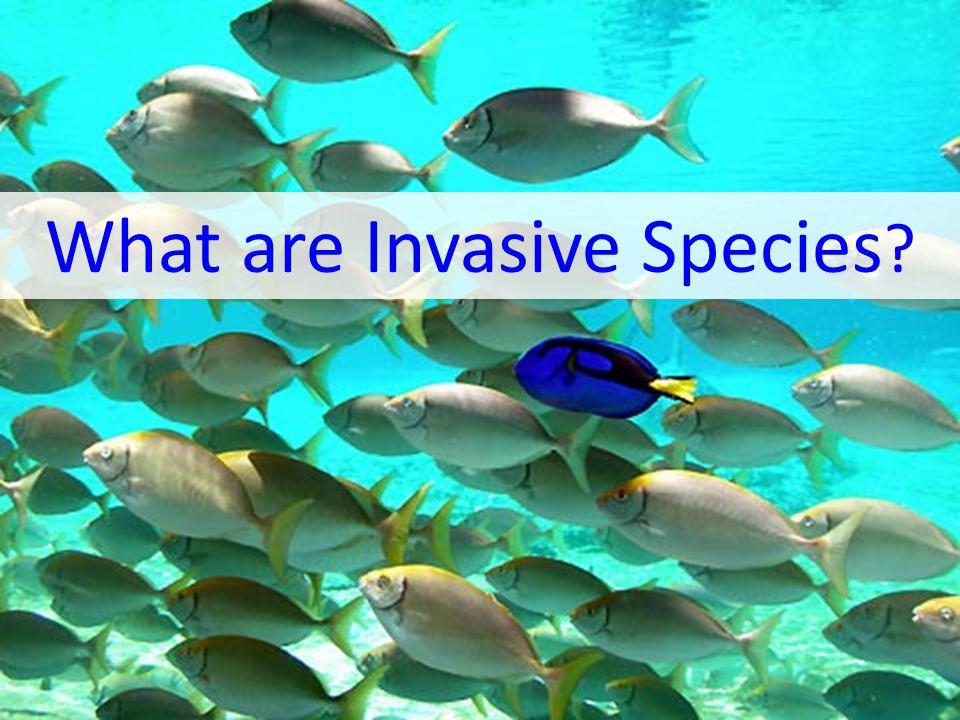 What are Invasive Species