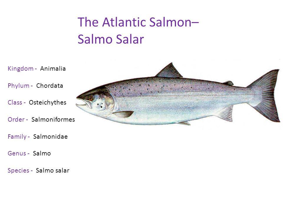 Zoe Salmon