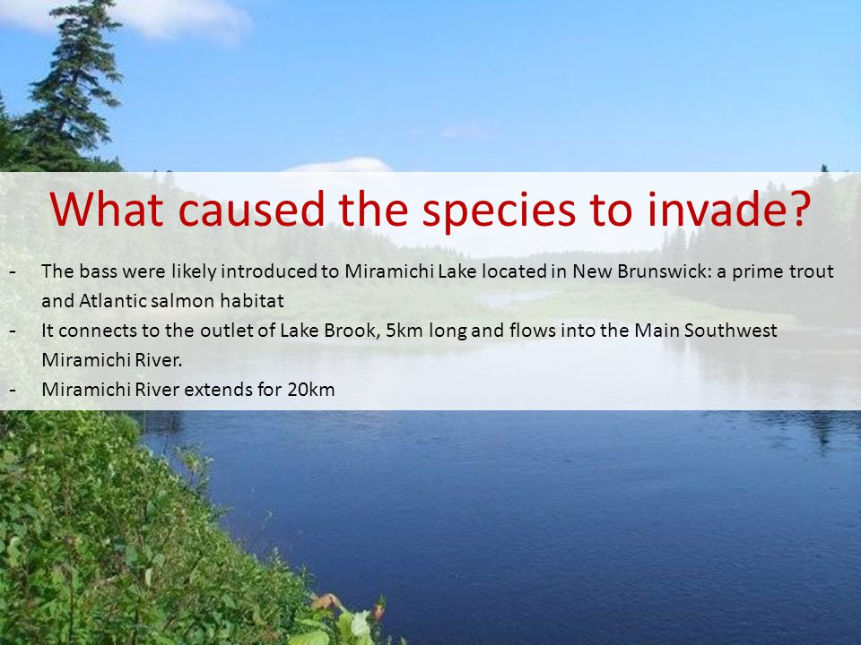 What caused the species to invade
