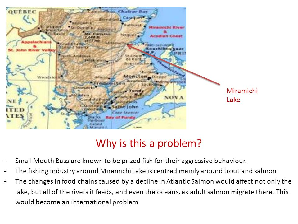 Why is this a problem Miramichi Lake