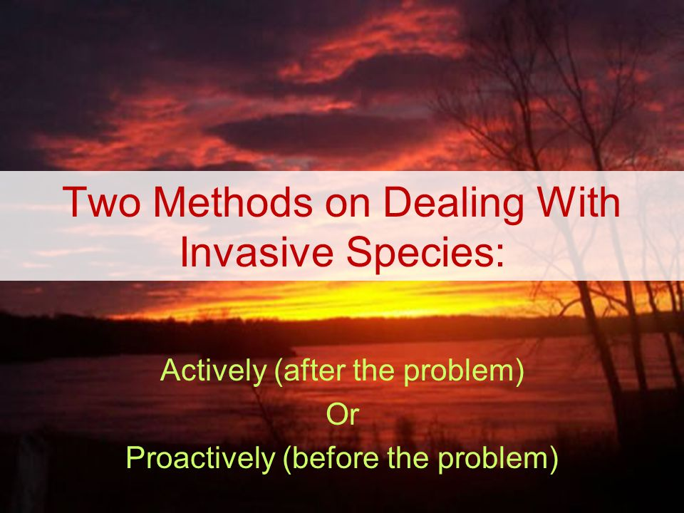 Two Methods on Dealing With Invasive Species: