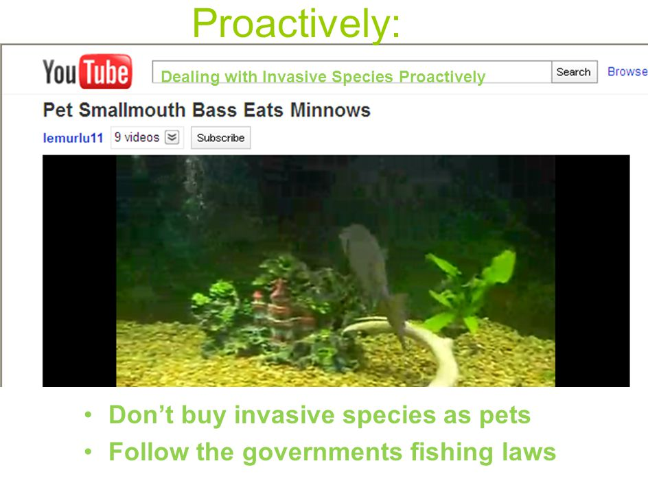 Proactively: Don't buy invasive species as pets