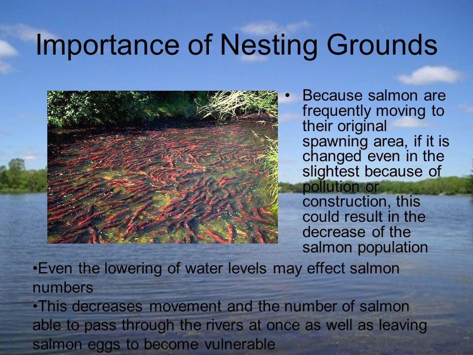 Importance of Nesting Grounds