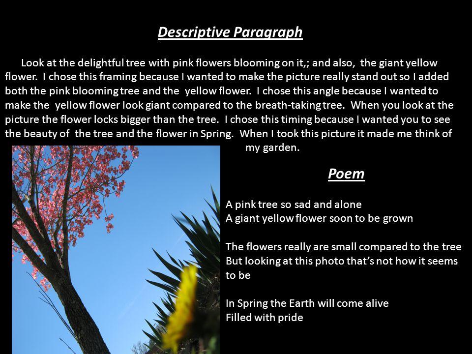 Descriptive Paragraph