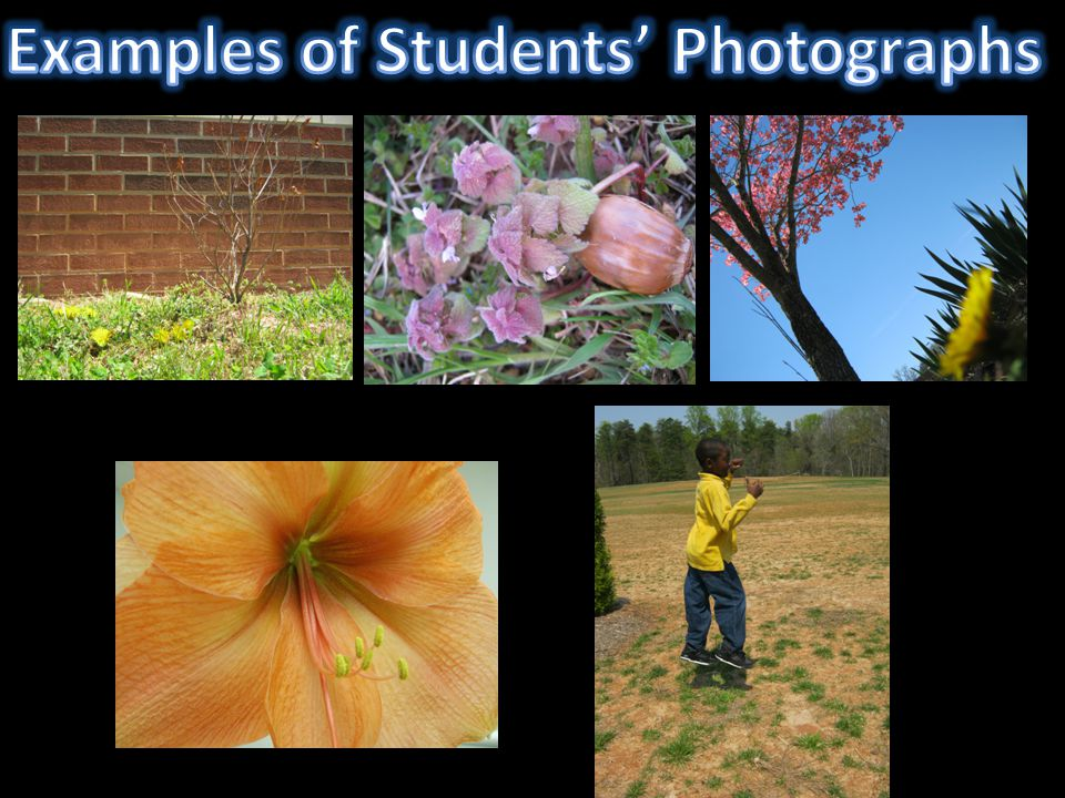 Examples of Students' Photographs