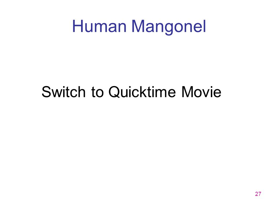 Human Mangonel Switch to Quicktime Movie