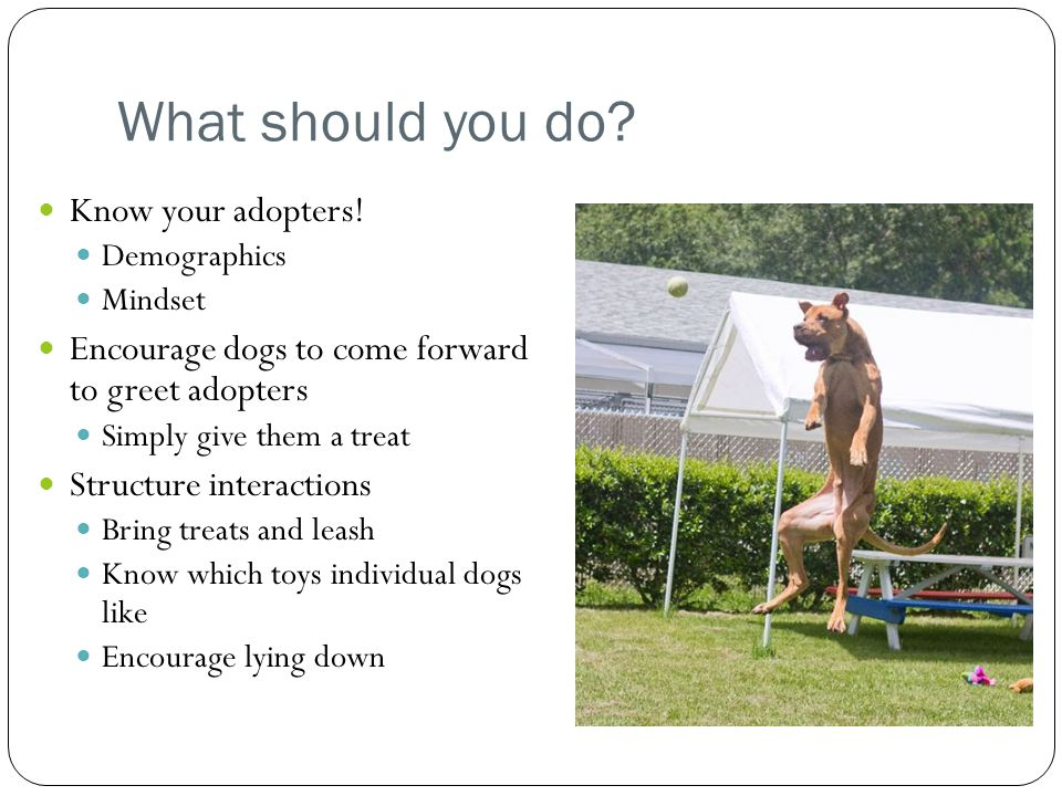 What should you do Know your adopters!
