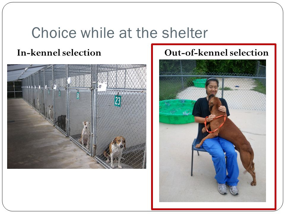 Choice while at the shelter
