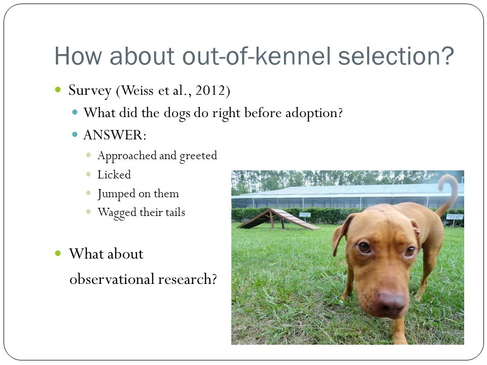How about out-of-kennel selection