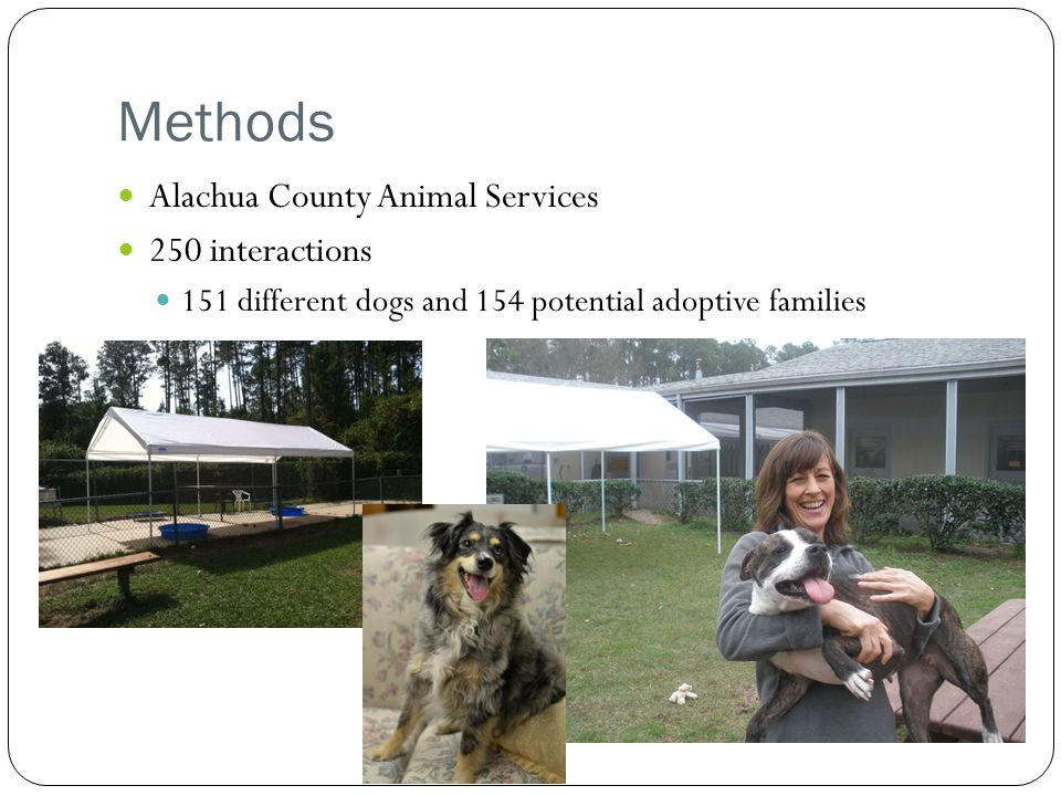 Methods Alachua County Animal Services 250 interactions