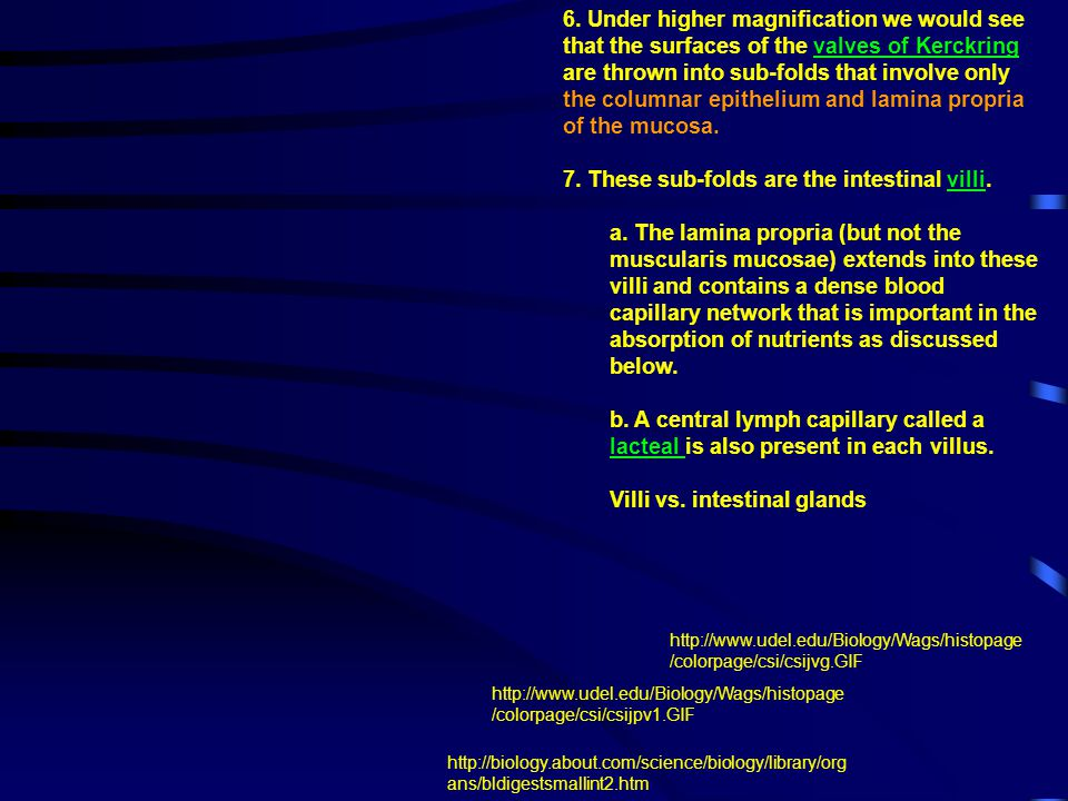 7. These sub-folds are the intestinal villi.