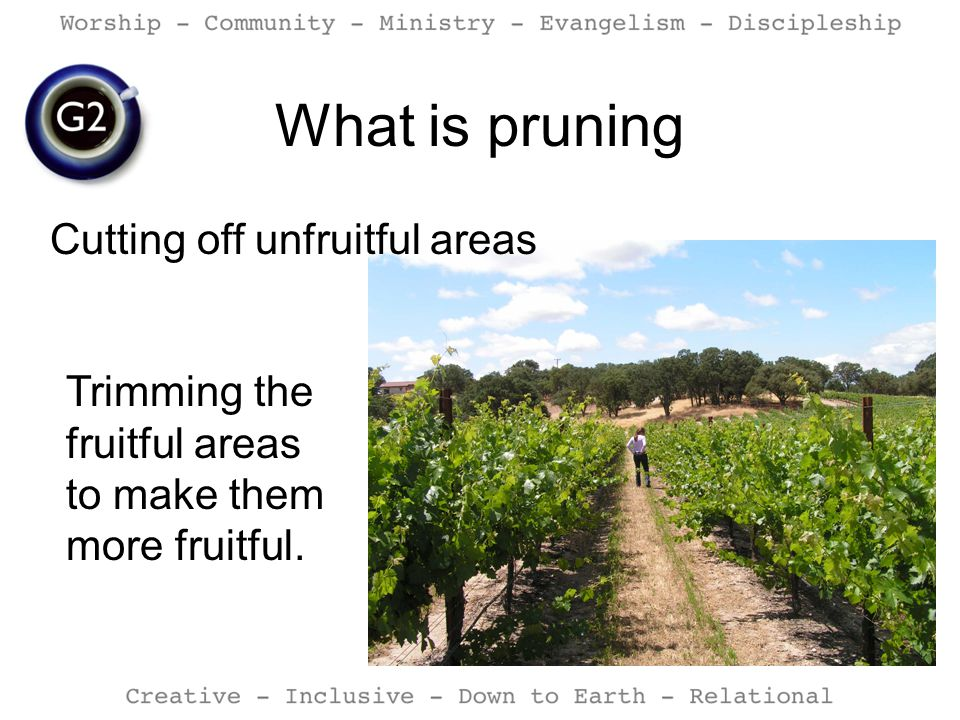 What is pruning Cutting off unfruitful areas