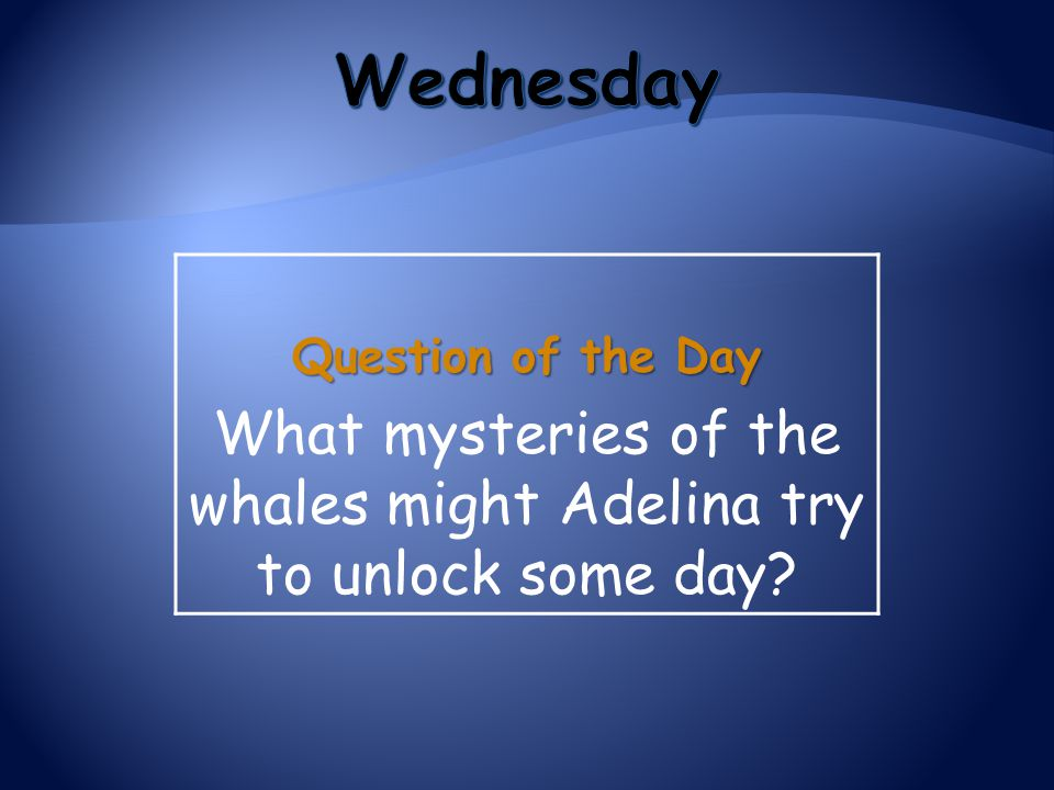 What mysteries of the whales might Adelina try to unlock some day