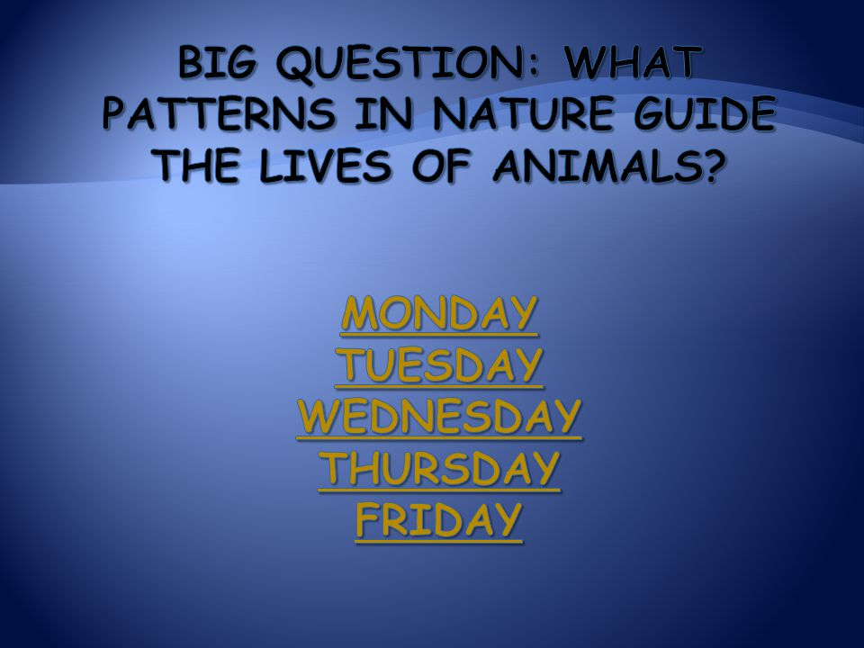 Big Question: What patterns in nature guide the lives of animals
