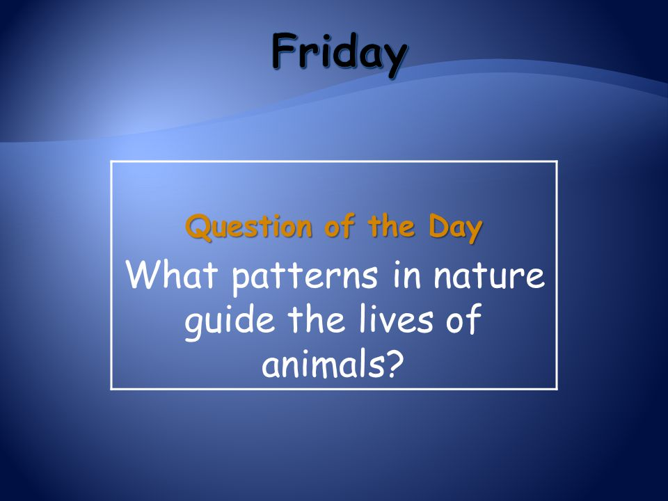 What patterns in nature guide the lives of animals