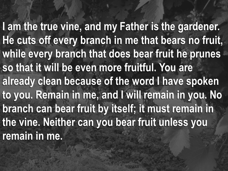 I am the true vine, and my Father is the gardener