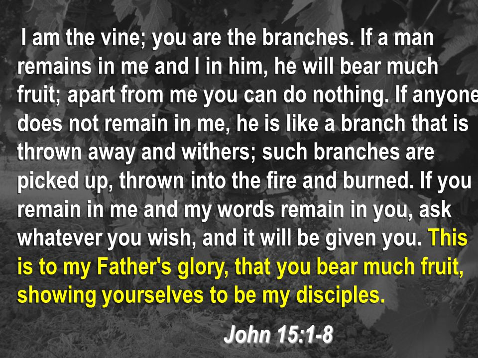 I am the vine; you are the branches