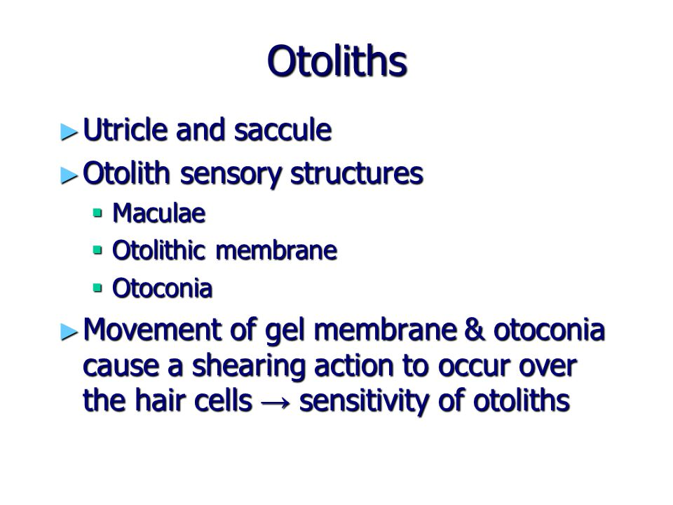 Otoliths Utricle and saccule Otolith sensory structures