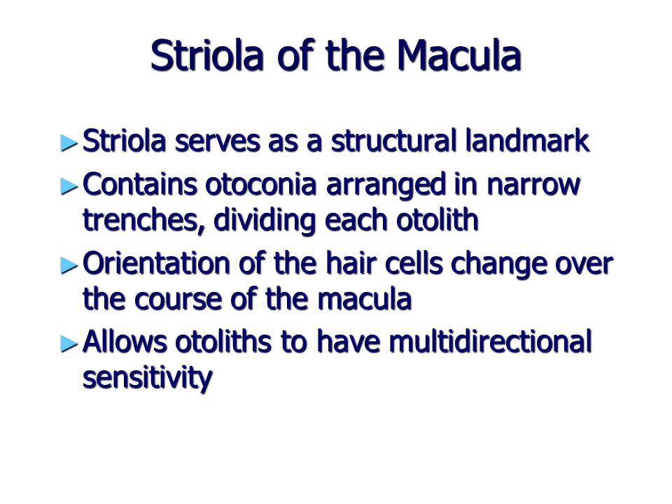 Striola of the Macula Striola serves as a structural landmark