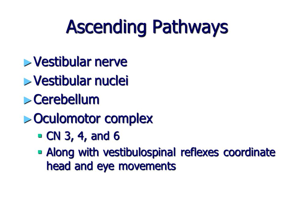 Ascending Pathways Vestibular nerve Vestibular nuclei Cerebellum