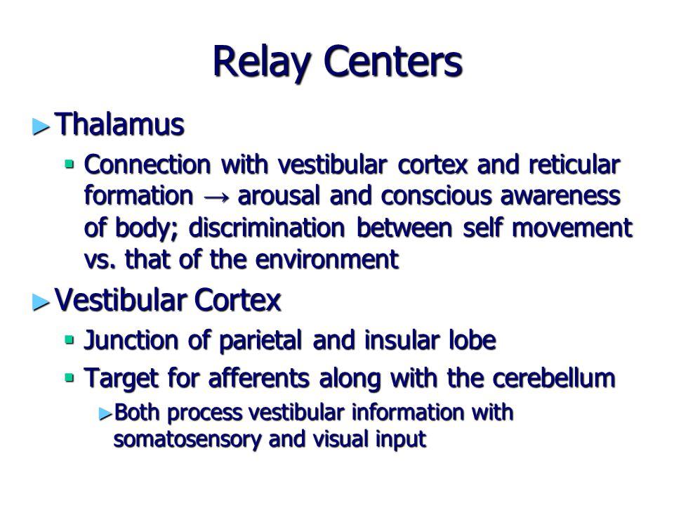 Relay Centers Thalamus Vestibular Cortex