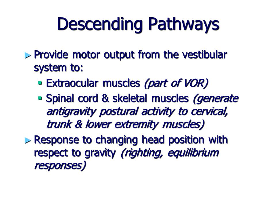 Descending Pathways Provide motor output from the vestibular system to: Extraocular muscles (part of VOR)