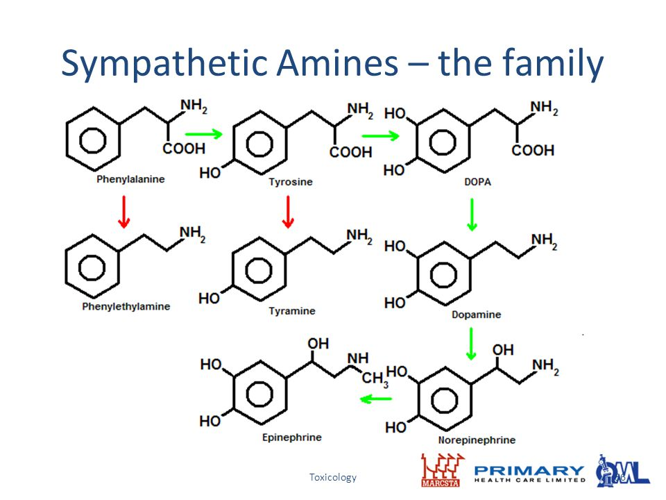 Sympathetic Amines – the family