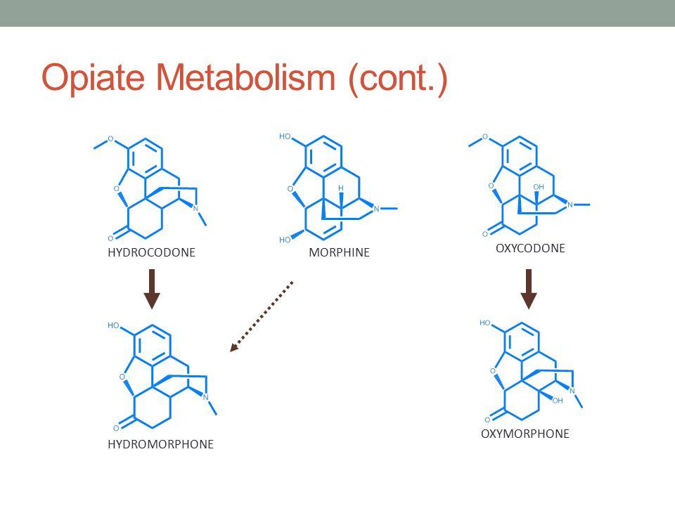 Opiate Metabolism (cont.)