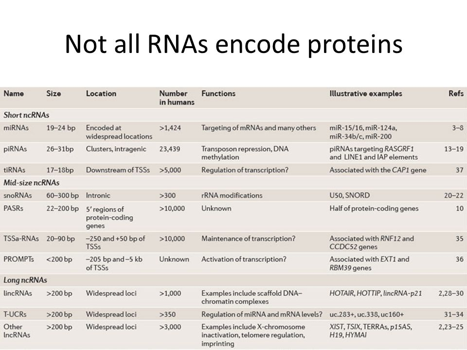 Not all RNAs encode proteins