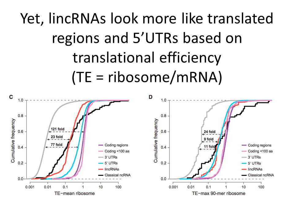 Yet, lincRNAs look more like translated regions and 5'UTRs based on translational efficiency (TE = ribosome/mRNA)