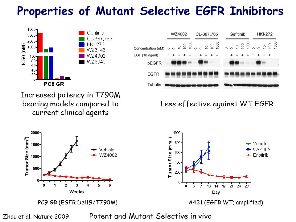 Properties of Mutant Selective EGFR Inhibitors
