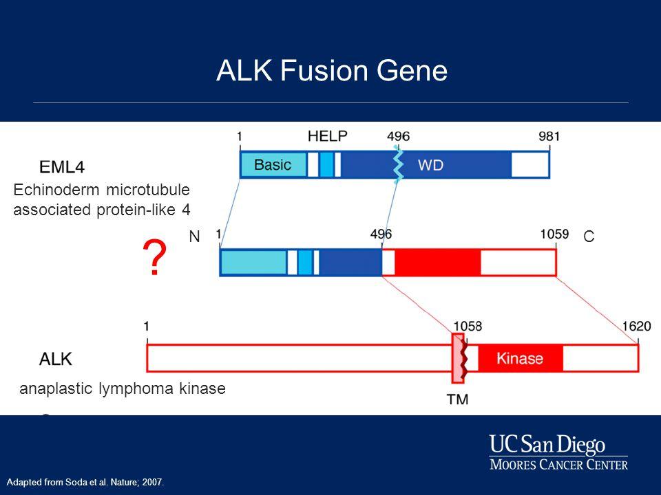 ALK Fusion Gene Echinoderm microtubule associated protein-like 4 N C