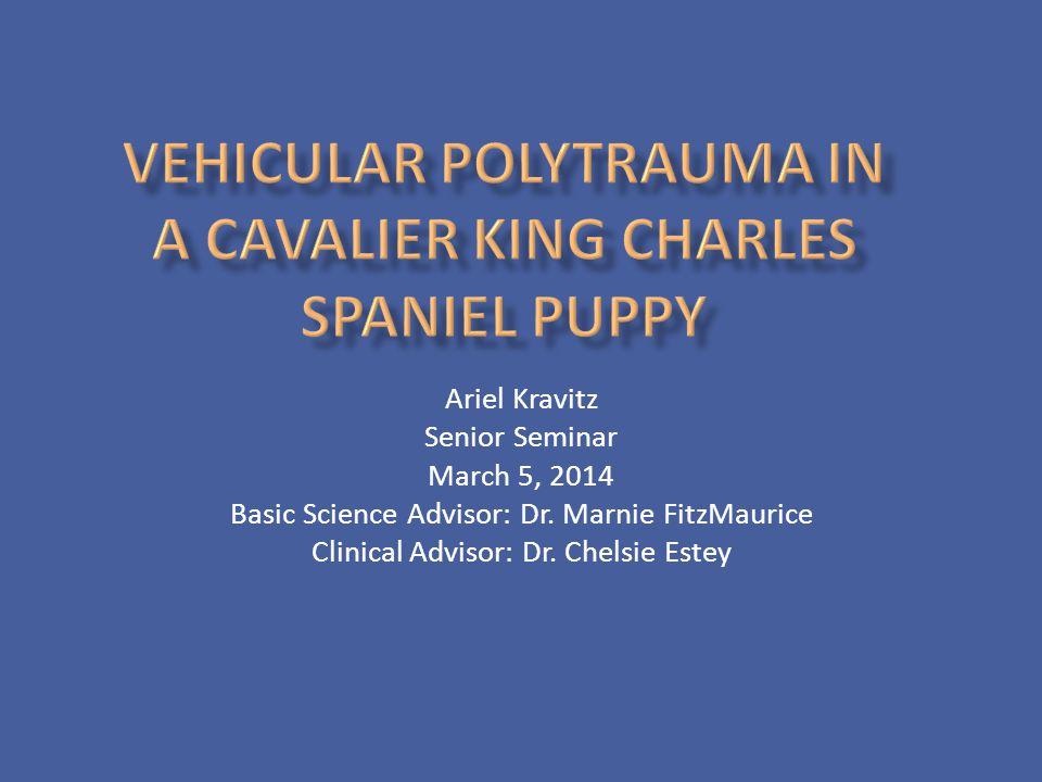 Vehicular Polytrauma in a Cavalier King Charles Spaniel Puppy