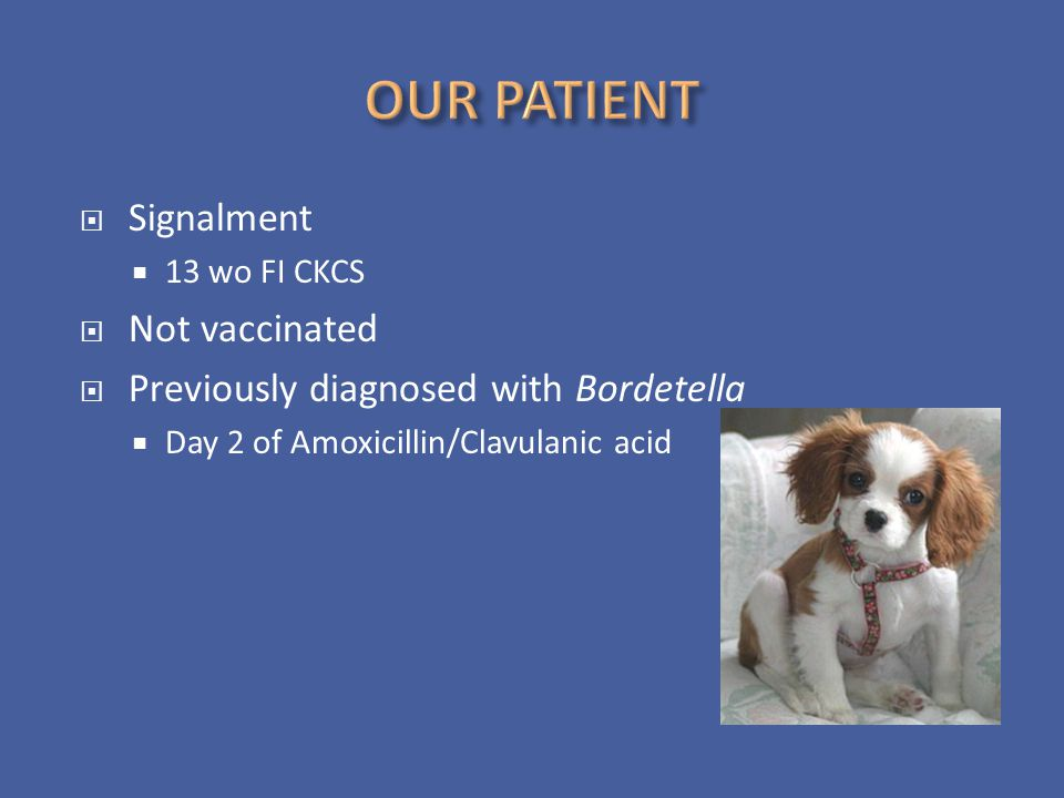 OUR PATIENT Signalment Not vaccinated