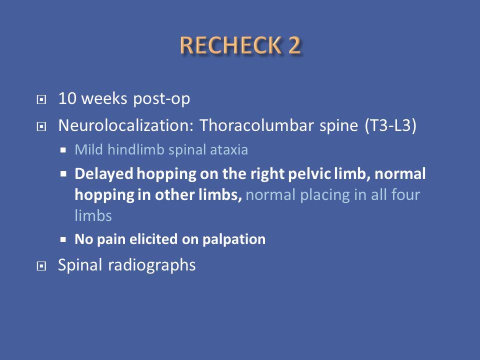RECHECK 2 10 weeks post-op. Neurolocalization: Thoracolumbar spine (T3-L3) Mild hindlimb spinal ataxia.