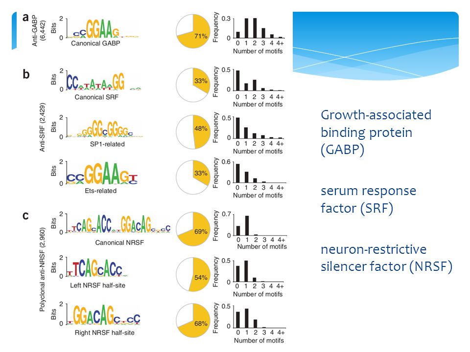 Growth-associated binding protein (GABP)