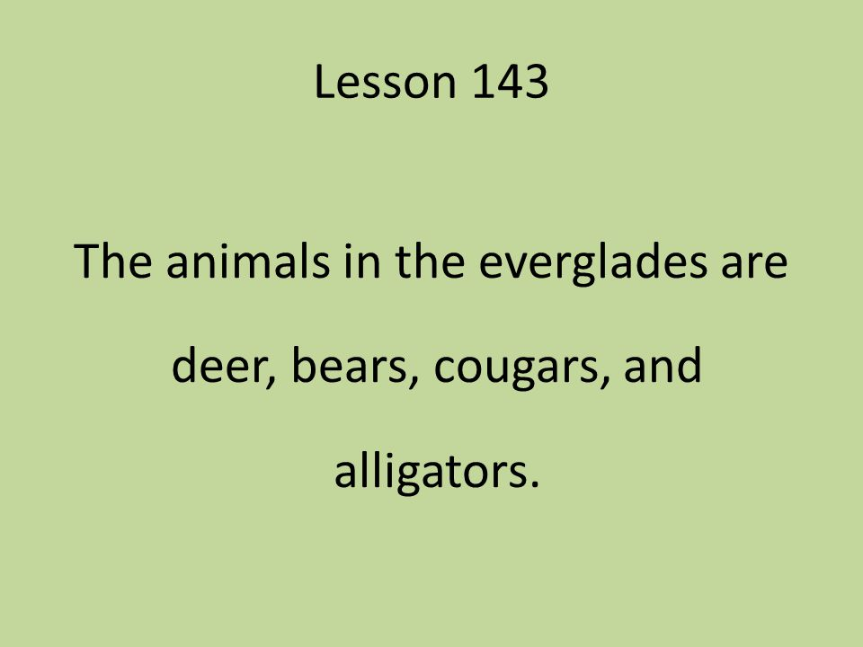 Lesson 143 The animals in the everglades are deer, bears, cougars, and alligators.