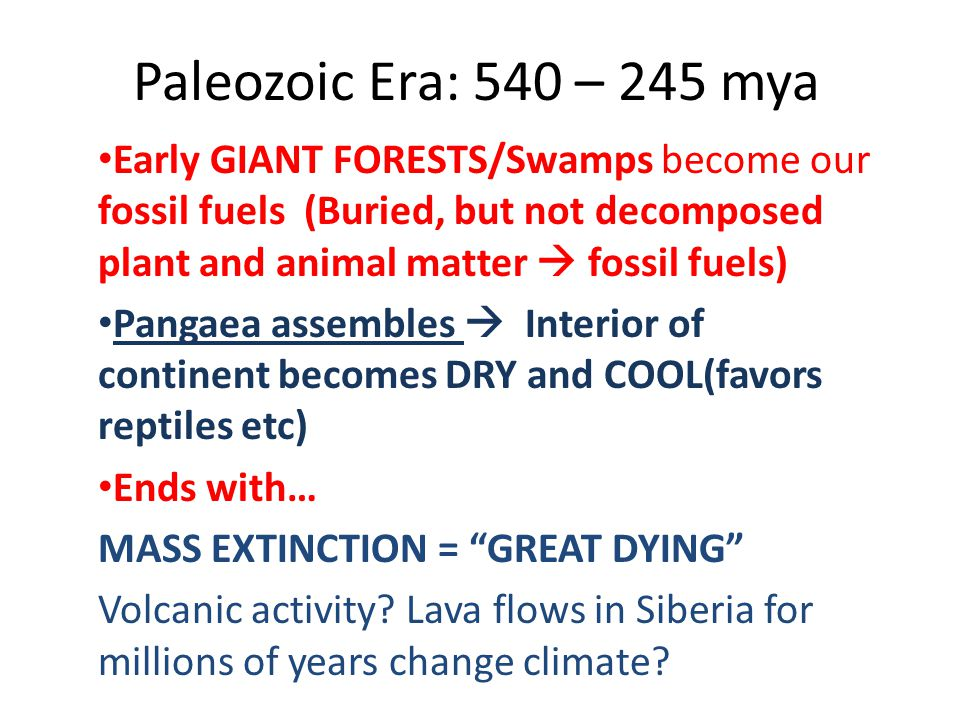Paleozoic Era: 540 – 245 mya Early GIANT FORESTS/Swamps become our fossil fuels (Buried, but not decomposed plant and animal matter  fossil fuels)