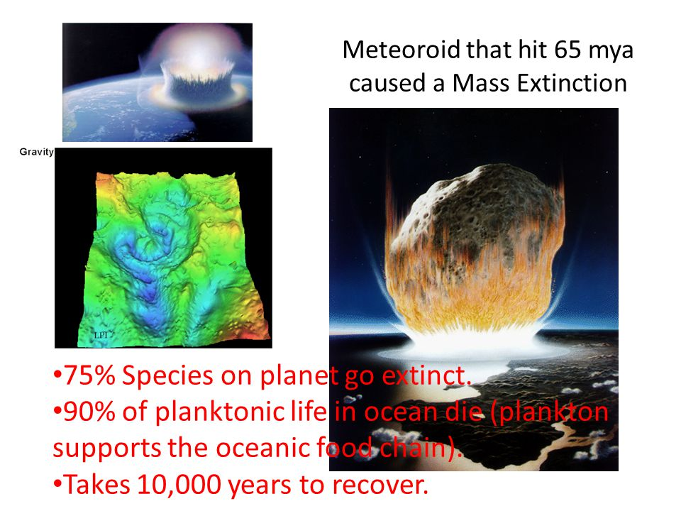 Meteoroid that hit 65 mya caused a Mass Extinction