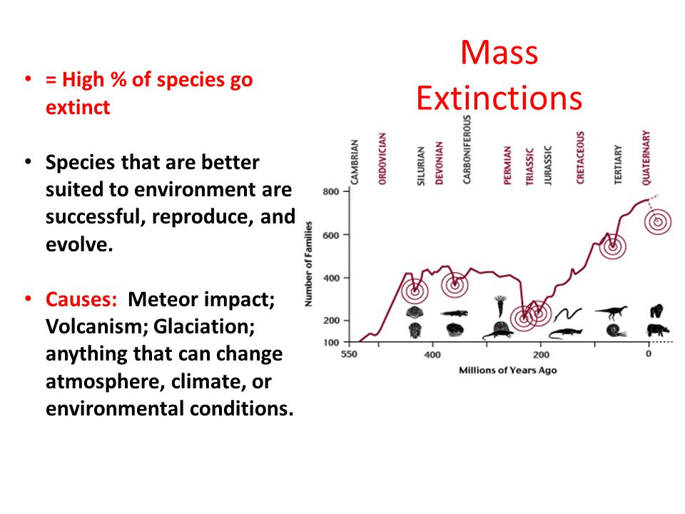Mass Extinctions = High % of species go extinct