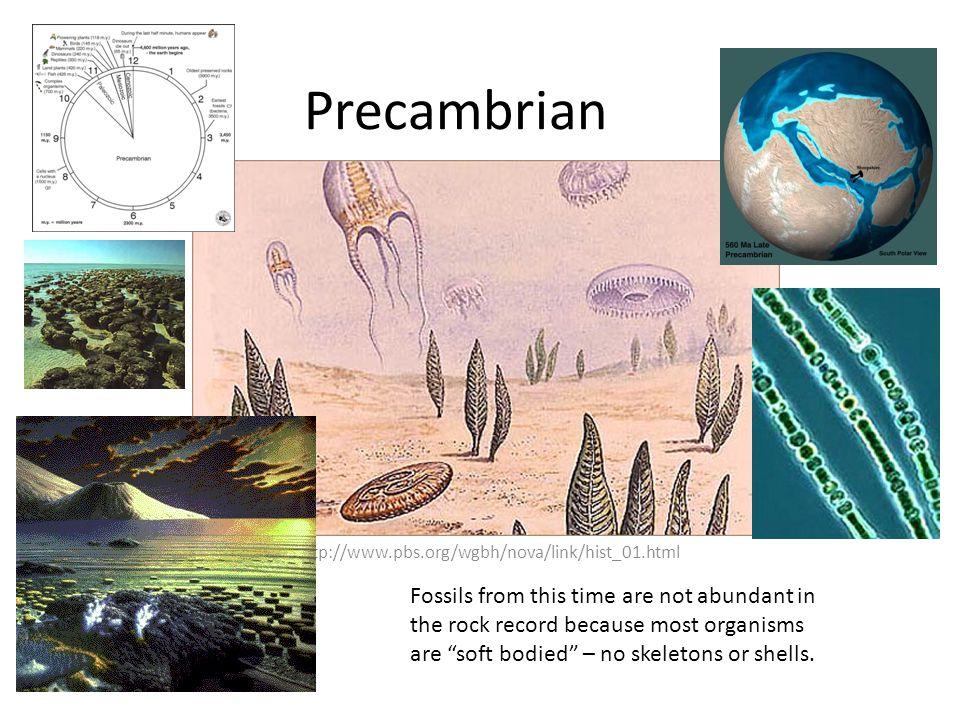 Precambrian http://www.pbs.org/wgbh/nova/link/hist_01.html.