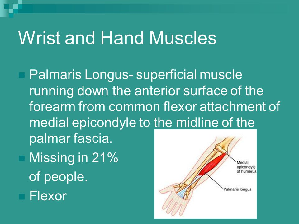 Wrist and Hand Muscles