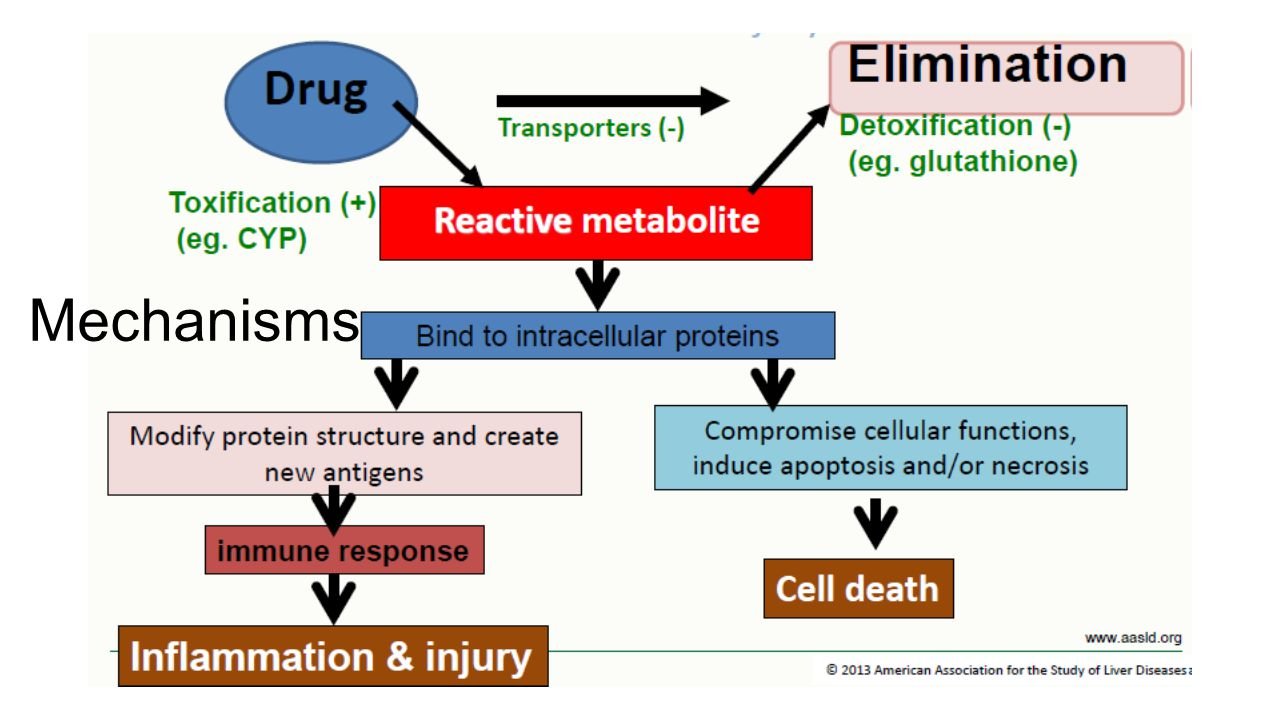 Mechanisms DILI can result from reactive drug metabolites; their concentration depends on toxification and detoxification enzymes.