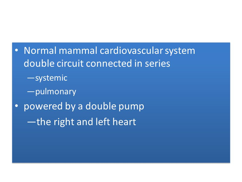 Normal mammal cardiovascular system double circuit connected in series