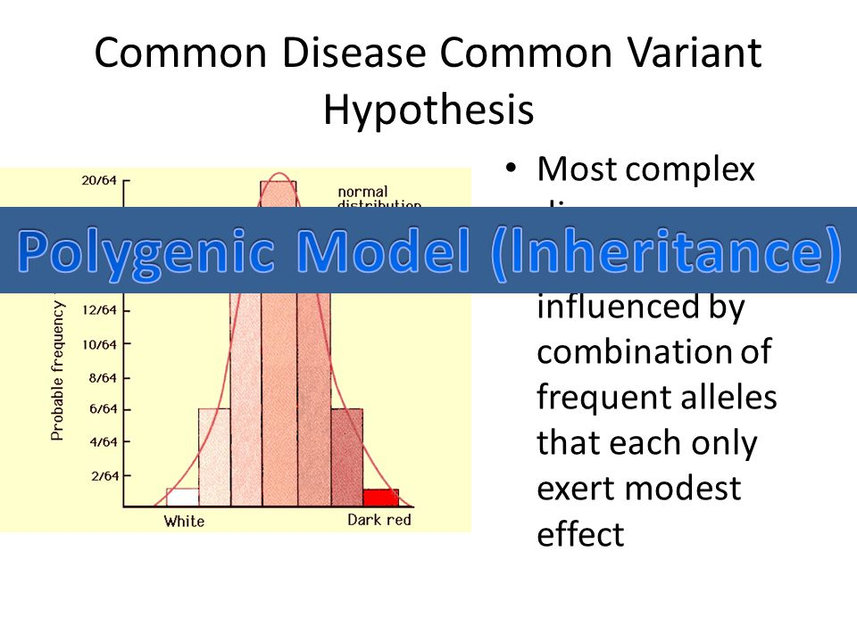 Common Disease Common Variant Hypothesis