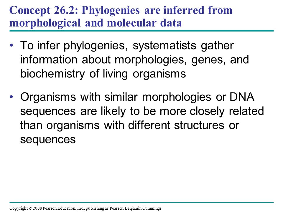 Concept 26.2: Phylogenies are inferred from morphological and molecular data